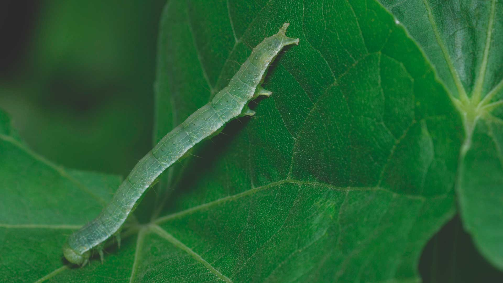 Organic Management of Fall Pests from High Mowing Organic Seeds blog