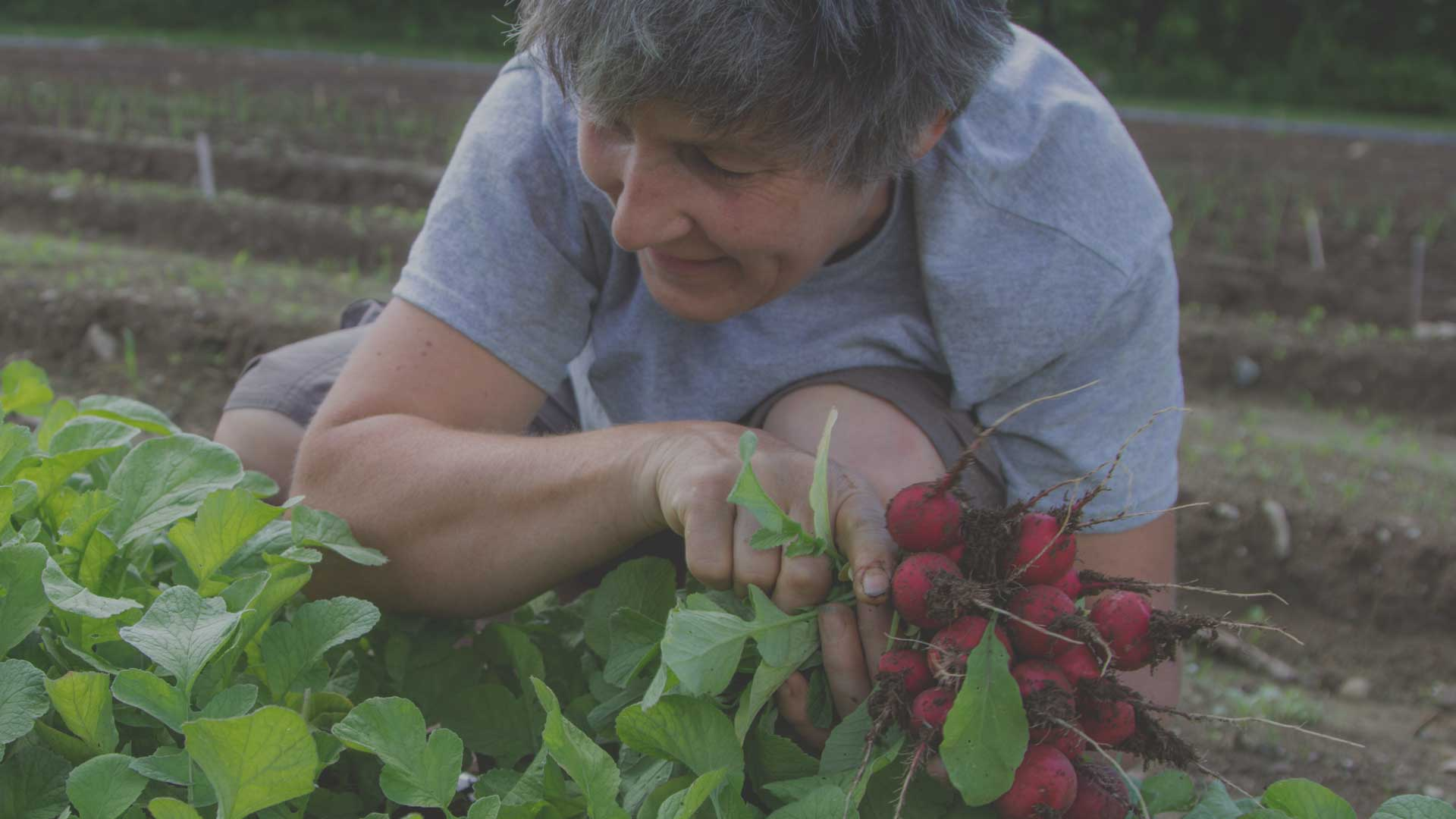 Organic Non-GMO Growing Tips for First Time Growers from High Mowing Organic Seeds blog