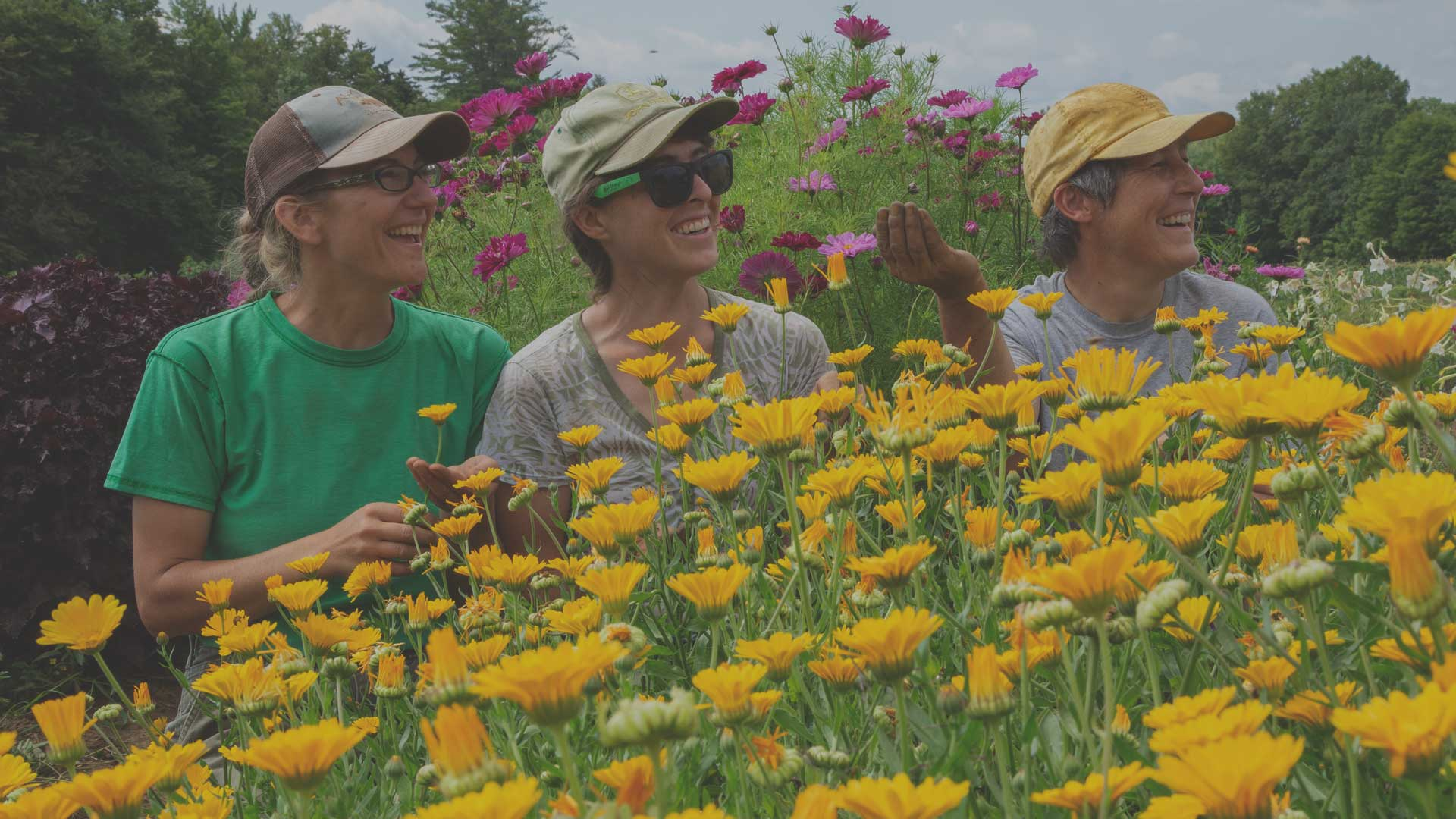 Adding Organic Flowers to the Farm from High Mowing Organic Seeds blog