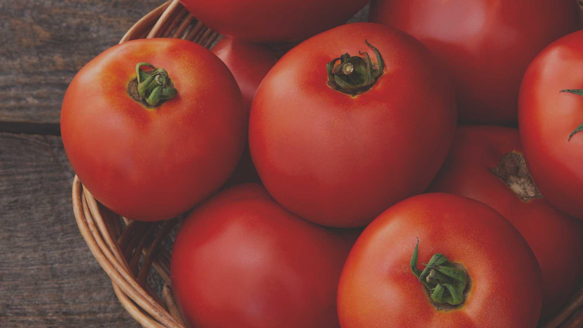 Organic Non-GMO Galahad F1 Tomato from High Mowing Organic Seeds