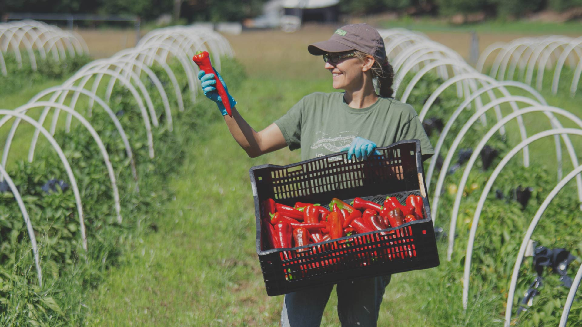 Do More with Your Hot Pepper Harvest from High Mowing Organic Seeds blog