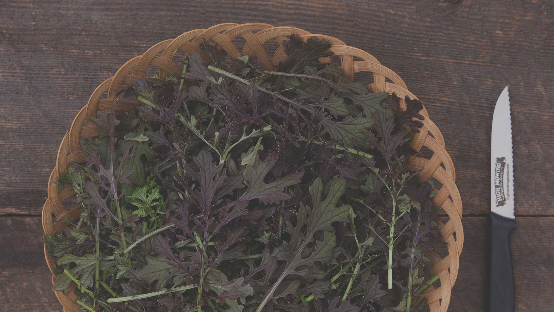 Organic Red Lace Mustard Greens from High Mowing Organic Seeds