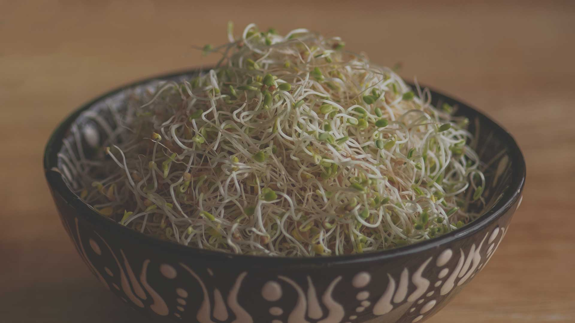 How to Grow Organic Non-GMO Sprouts from High Mowing Organic Seeds blog