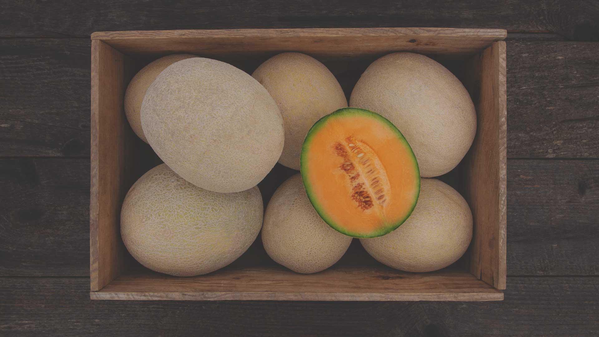 Organic True Love F1 Melon from High Mowing Organic Seeds blog
