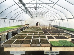 Best Practices for Early Season Seedling Propagation | High