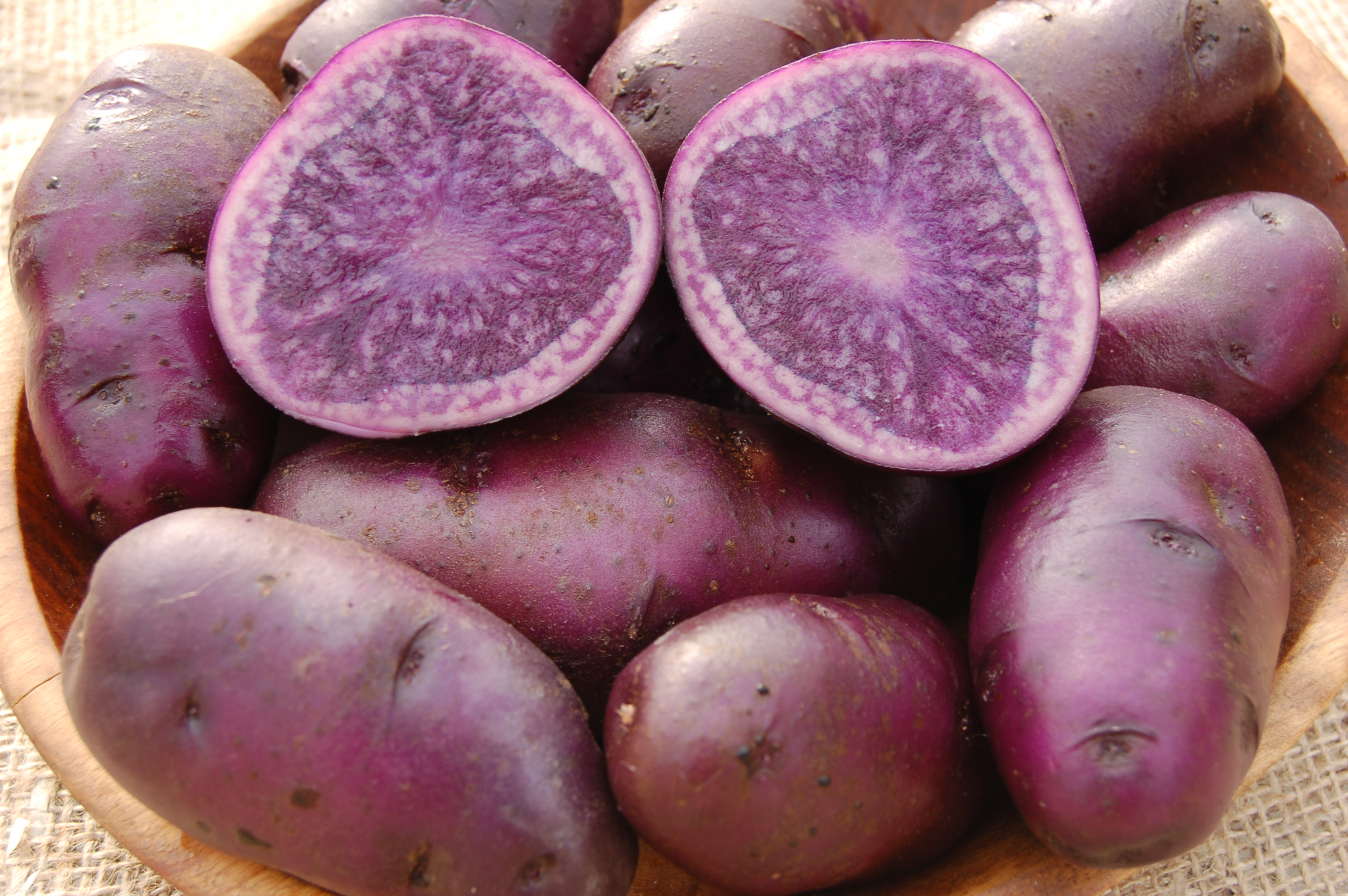 Plentiful Potatoes: Selecting the Right Varieties for Your