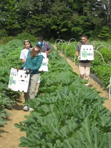 Gleaning food from the Trials Field