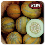 Organic Haogen Melon Seeds
