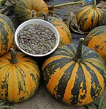 Kakai Pumpkin