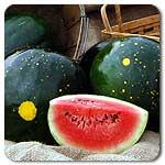 Organic Red Moon and Stars Watermelon