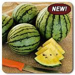Organic Baby Doll F1 Watermelon