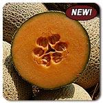 Organic Caribbean Gold Melon