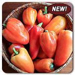 Organic Feher Ozon Pepper