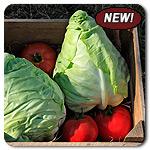 Organic Murdoc Cabbage