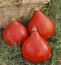 Red Kuri