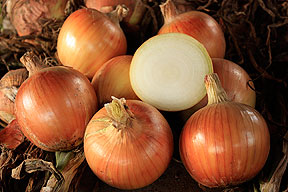 Organic Talon F1 Onion