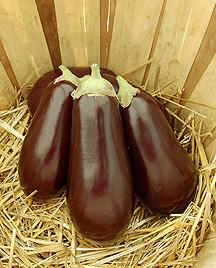 Traviata F1 Eggplant