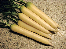 Organic White Satin Carrot