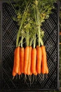 YaYa F1 Carrot