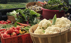 Growing vegetables can be successful with proper planning