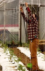 Trellising Your Organic Tomatoes | High Mowing Organic Non