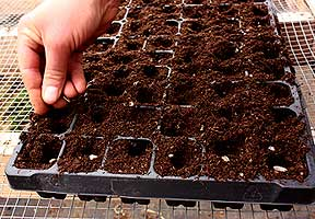 When To Plant Succession Plant Using Margaret Roach S Planting