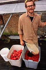 Organic Tomato Seed Saving!