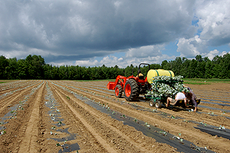 Introduction to Seed Saving, Part 2: Wet Seed Production ...
